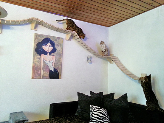 cat climbing furniture